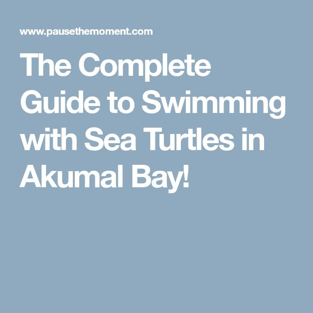 The Complete Guide to Swimming with Sea Turtles in Akumal Bay!