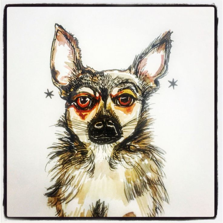 Cookie the chihuahua illustration by Lizzie Reakes