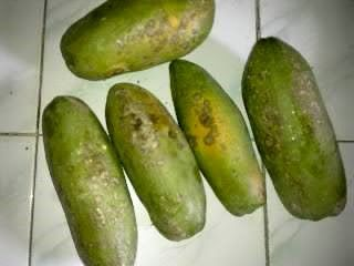 My Papayas Are Infected By Fungal Disease | The Real Education