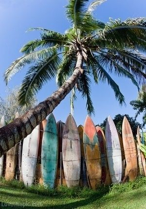 Surfing Dudes and Dudettes  http://twitterme.net  LIke it