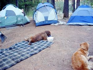 Taking your dog camping can be a blast, but there are some keys to making it comfortable for both of you. Here are 5 great tips for camping with your dog. http://sunnyscope.com/5-tips-dog-camping/