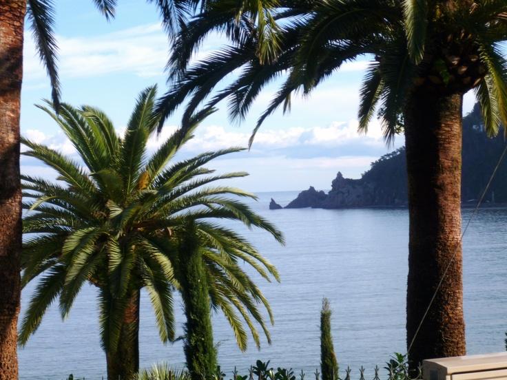Les palmiers à Théoule sur Mer