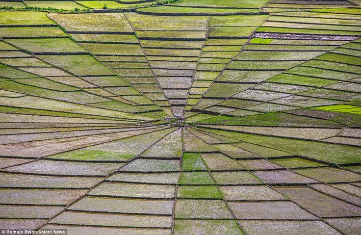 #FloresIndonesia The spider's web fields are known as Lingko fields and can be found in the mountains on the Indonesian island of Flores