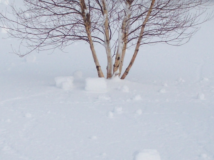 Last year the wind was making snow balls.  I had never seen this before.  They were all over the yard.
