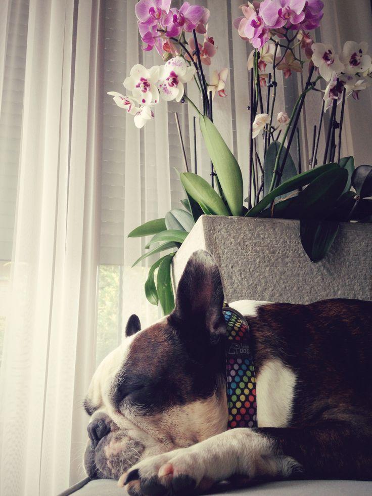 facebook.com/bloomdogdesign