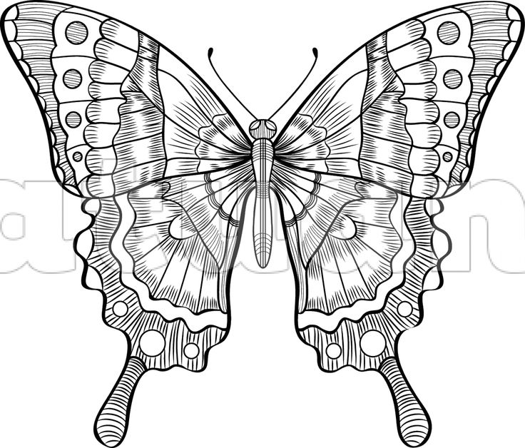 Motýl - XXL - Katuan's