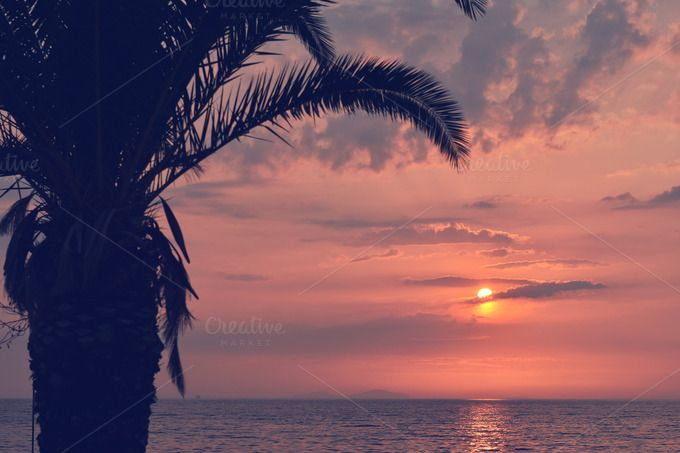 Palm Tree at Sunset by DreamstaleStock on @creativemarket