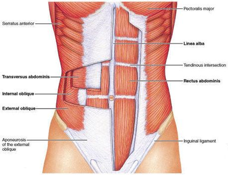 This describes all of the abdominal muscles and how to target each one in turn...