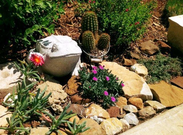 jardin de rocaille avec cactus et grandes pierres