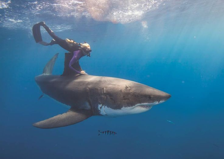 """Meet Ocean Ramsey. The girl free-dives with, and holds on to, 15-foot great white sharks in an effort to save them from """"finning."""" Read all about her and the cause she risks her life for, here:www.pacificsandiego.com/beauty-and-the-beasts"""