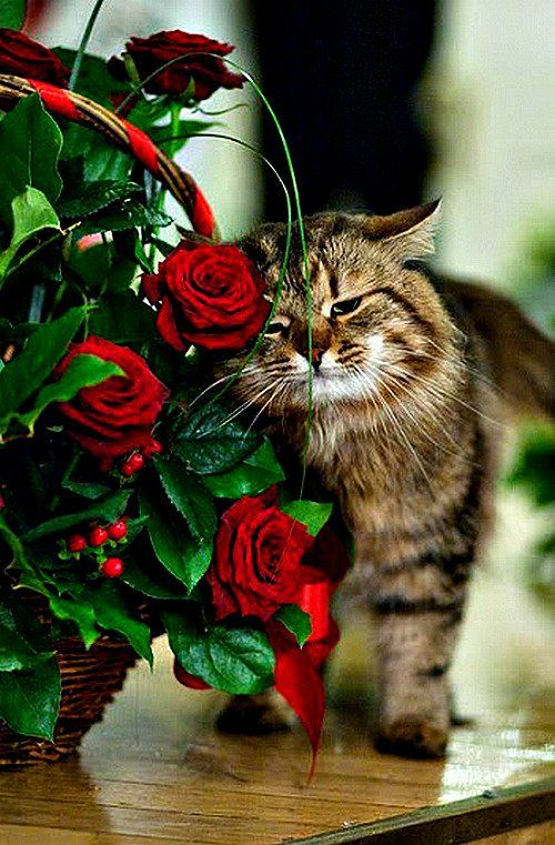 ничем кошка с цветами поздравления фото портретов арбате зависят