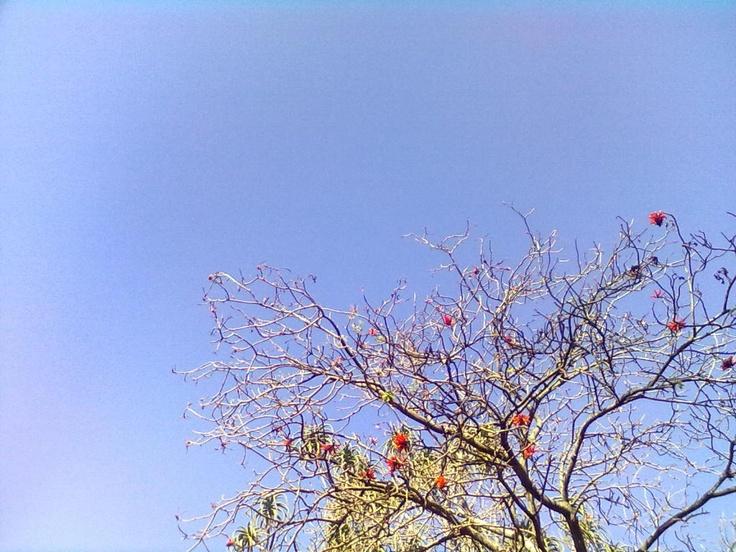 PHOTOGRAPHY :: 06092011629.jpg image by phililen3 - Photobucket