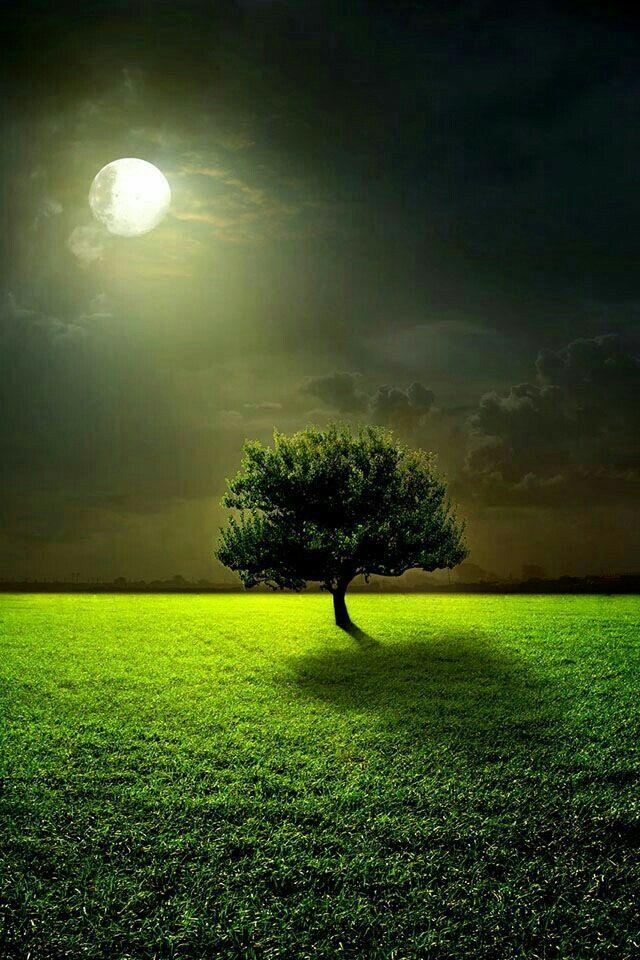 Elegant A Beautiful Moonlit Night.