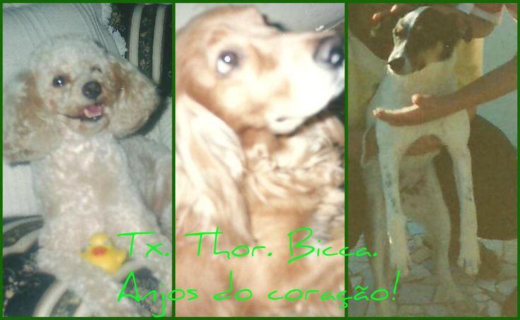 Três anjos muito amados que já partiram para além da ponte do arco-íris: Tx, Thor Ossinho e Bicca. Amores eternos e inesquecíveis! Amor e saudades...