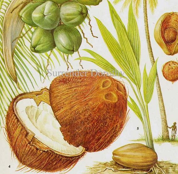 Coconut Palm Tree Tropical Fruit Chart Food by SurrenderDorothy, $11.89 - MAY