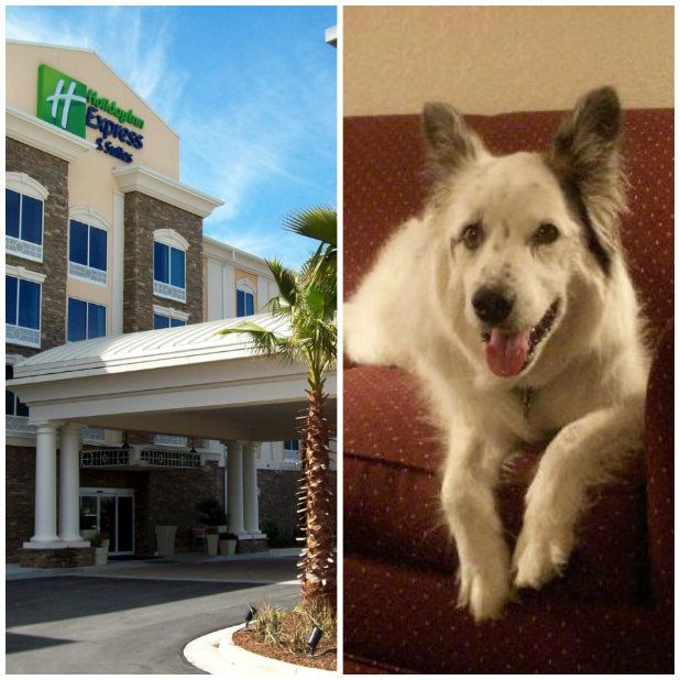 Hotels that allow pets