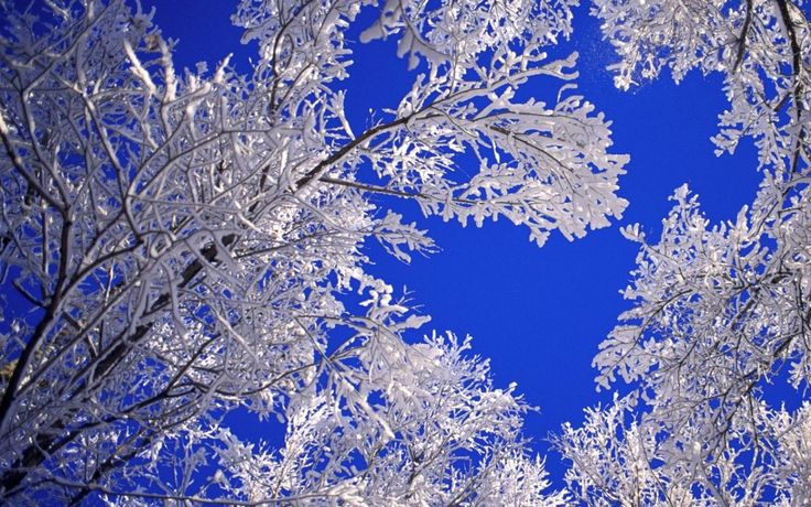 Beautiful Trees Wallpapers for Desktop | Beautiful Winter Tree HD Wallpaper For Desktop