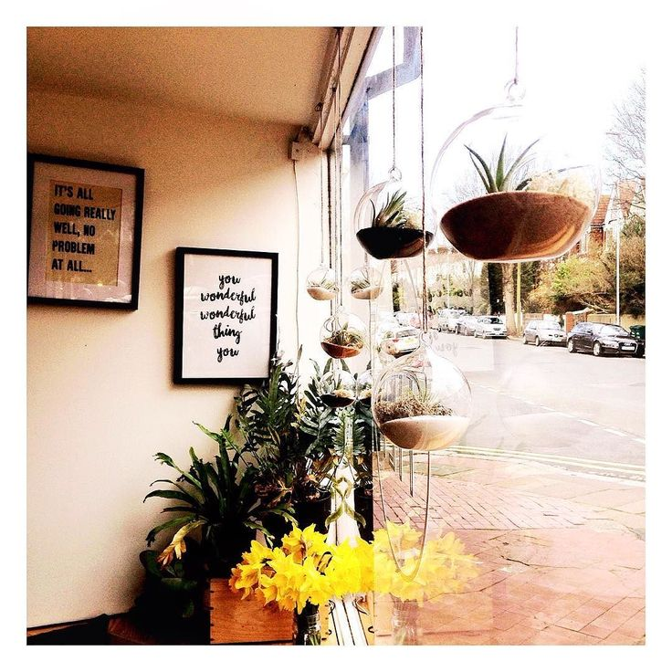 So happy to have my terrariums hanging in the window of the wonderful Tilt Coffee Shop at Fiveways Brighton. Pop down have a cup of the best organic coffee a chat with the lovely staff support local businesses and check out the little hanging gardens - plus there's 10% off for Fiveways Local Business discount.