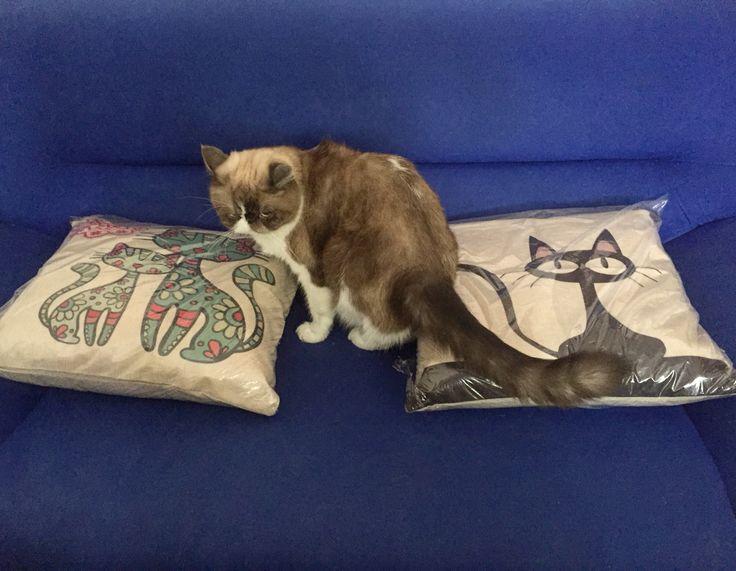 Catlove #cojin #cats #cojin #gato #inspecciongato Síguenos en instagram @rogodeco ... Comunícate con nosotros en los teléfonos  300-733-83-08 / 304-546-0064