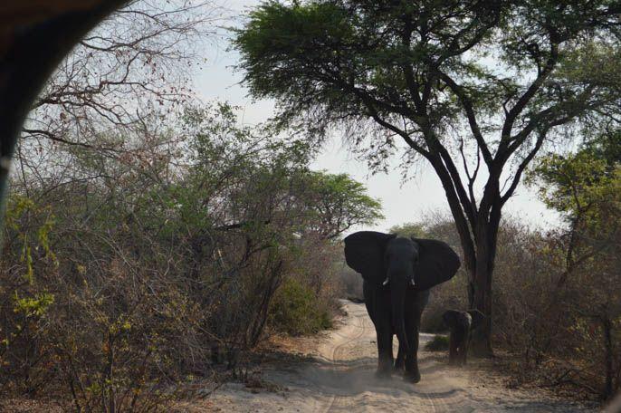 Meu overland tour de 8 dias na África – por África do Sul, Botsuana, Namíbia e Zimbábue   Fui, gostei, contei   por Carla Boechat