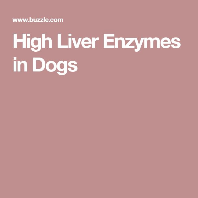 High Liver Enzymes in Dogs