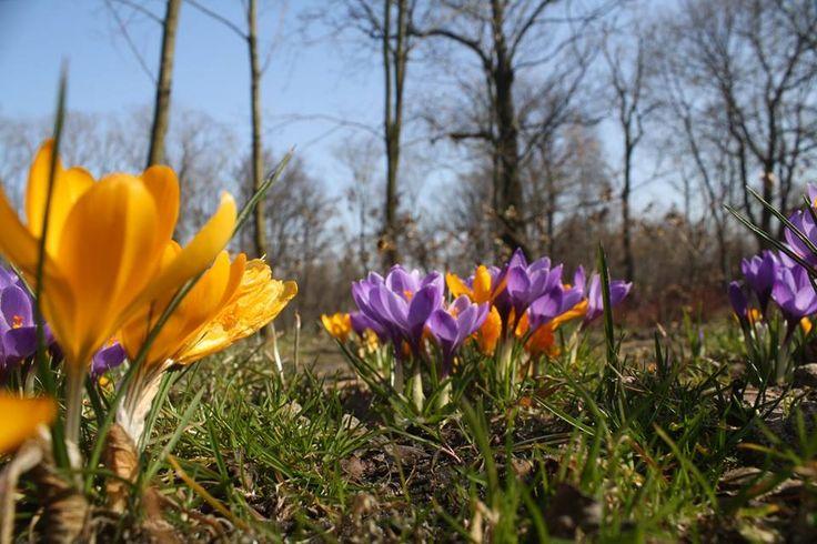Park Szwajcaria #gliwice #wiosna #springtime