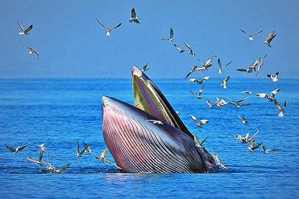 Scientists discover new species of whale in the Gulf.