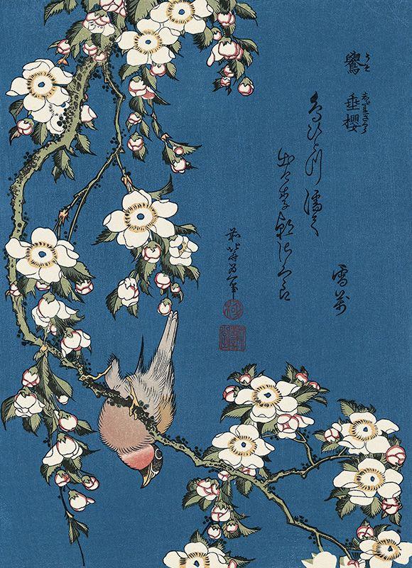 Hokusai/ Bullfinch and Weeping Cherry (Uso, Shidarezakura), from an untitled Chuban series of Flower and Bird