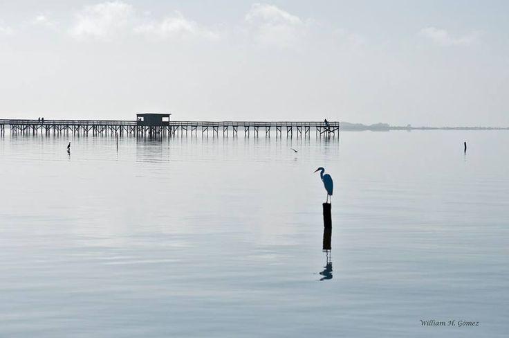 Garça no espelho da Lagoa dos Patos - William H. Gómez