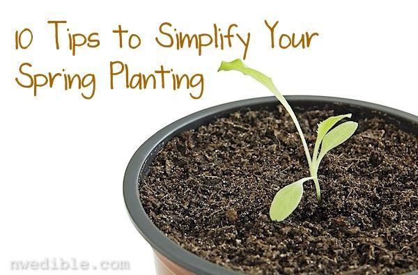 10 Tips to Simplify Your Spring PlantingGardens Seeds, Edible Gardens, Gardens Thoughts, Veg Gardens, Nw Edible, Seeds Start, Spring Plants, Simplify Spring, Schools Gardens