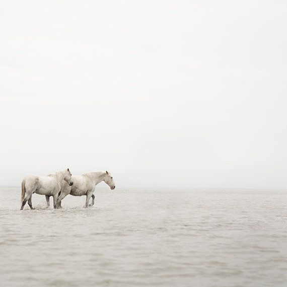 Horse Art, Equine Photography, White Horses, Water, Camargue, Winter Photo, Muted, Simple Nautical, Minimal - Far Away So Close
