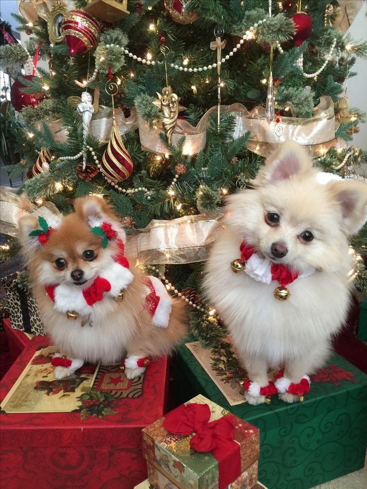 157 Best Puppies Or Dogs At Christmastime Images On