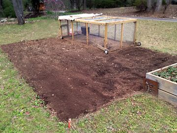 5 chickens completely cleared this land of grass and weeds and tilled it over a month long period of moving the run from place to place.