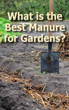 What Is The Best Manure For Gardens Garden Compost 400 x 300