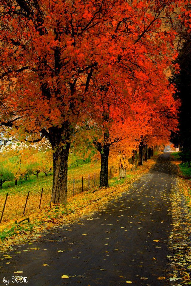 Autumn ~ wouldn't this be a pretty driveway?