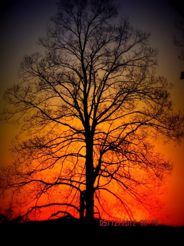 Took this picture at the Sunrise at Floral Park Cemetery, Johnson City NY. A great picture thanks to Picasa.