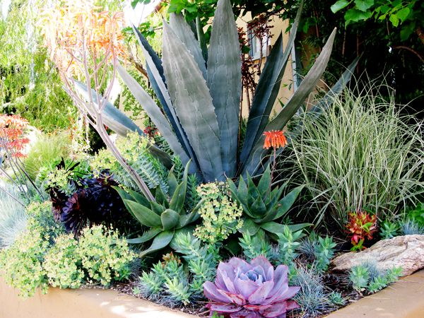 17 Best Images About Southwestern Landscaping On Pinterest