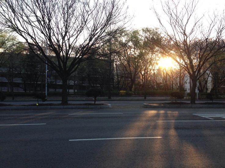 어쩐지 감격스러웠던 아침. 개포동의 봄.