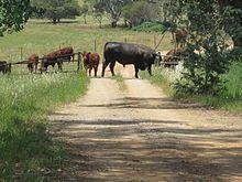 Cattle grid - Wikipedia