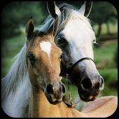Aranyos Ló háttérképek
