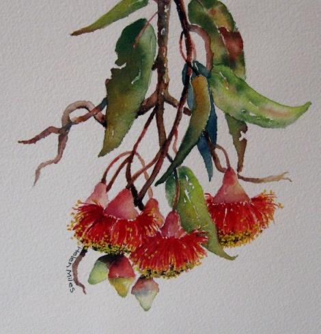 Flowering Gum (Watercolour) - Helen Miles