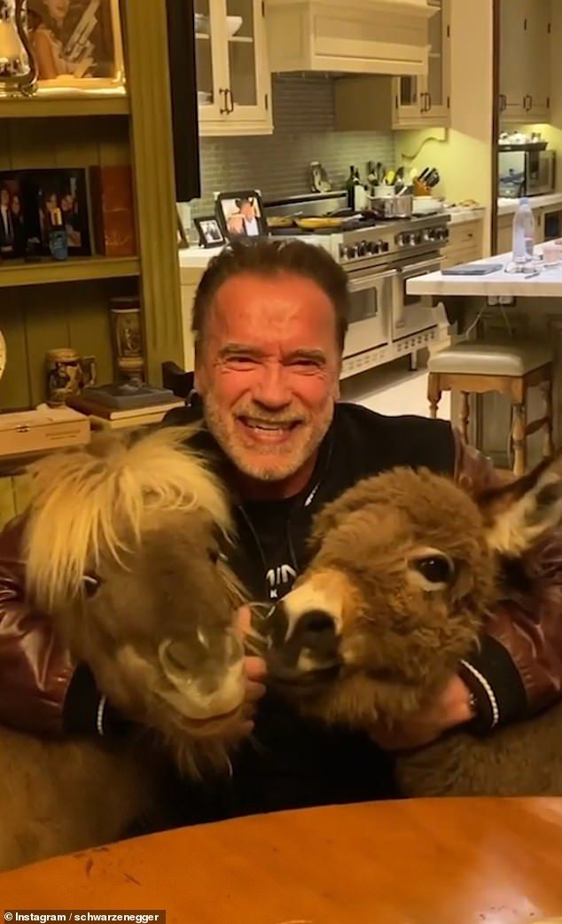 Schwarzenegger With Whiskey Lulu In 2020 Pet Donkey Miniature Horse Arnold Schwarzenegger