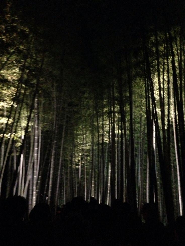 京都 高台寺 ライトアップ kyoto