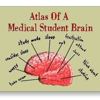 1641 Best Medical Students Images On Pinterest | Nursing Schools, Med  Student And Medical Students