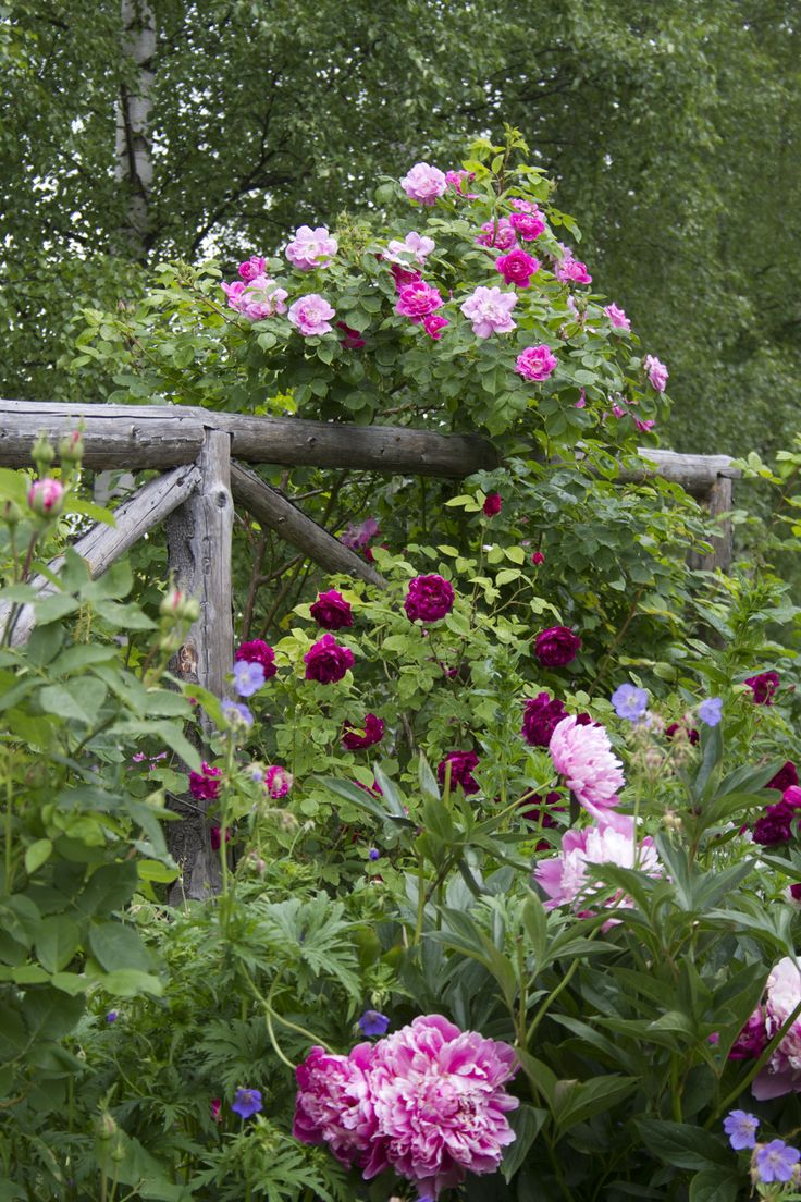 Beautiful fence covered with flowers