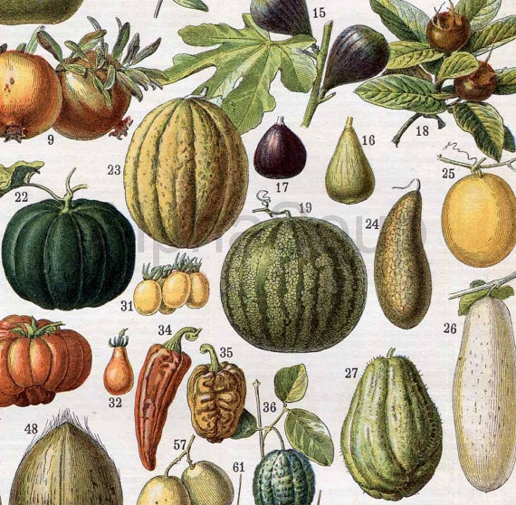 1000+ images about Fruit and Vegetable Prints on Pinterest ...