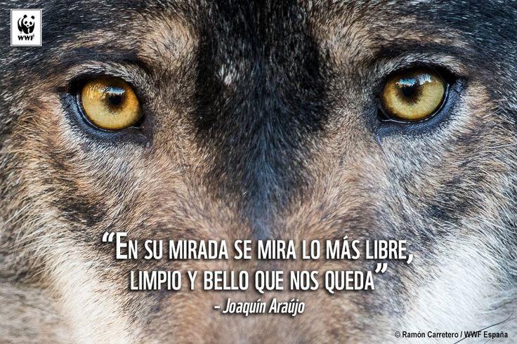 WWF España (@WWFespana) | Twitter