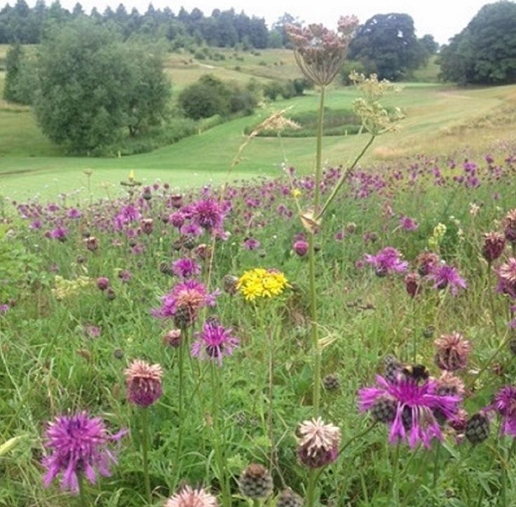 Greetham Valley won the national 2017 Environmental Golf Course of the Year award for our work supporting wildlife.