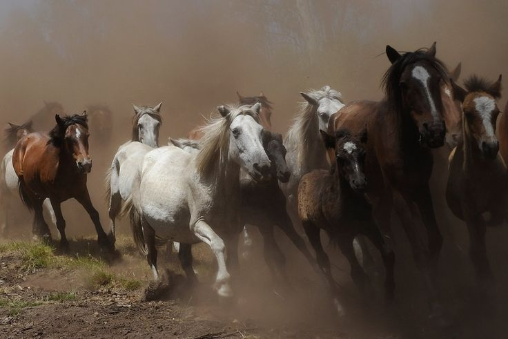 Horses on the Hungarian plains. Get free teaching aids and homework resources for The Good Master by Kate Seredy at www.LitWitsWorkshops.com/free-resources/ ... We also offer hands-on, sensory enrichment guides!
