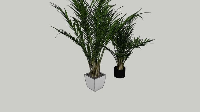 Areca Palm 3d Warehouse Areca Palm Sketchup Model Palm